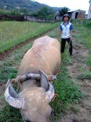 Duong Van Nam 3